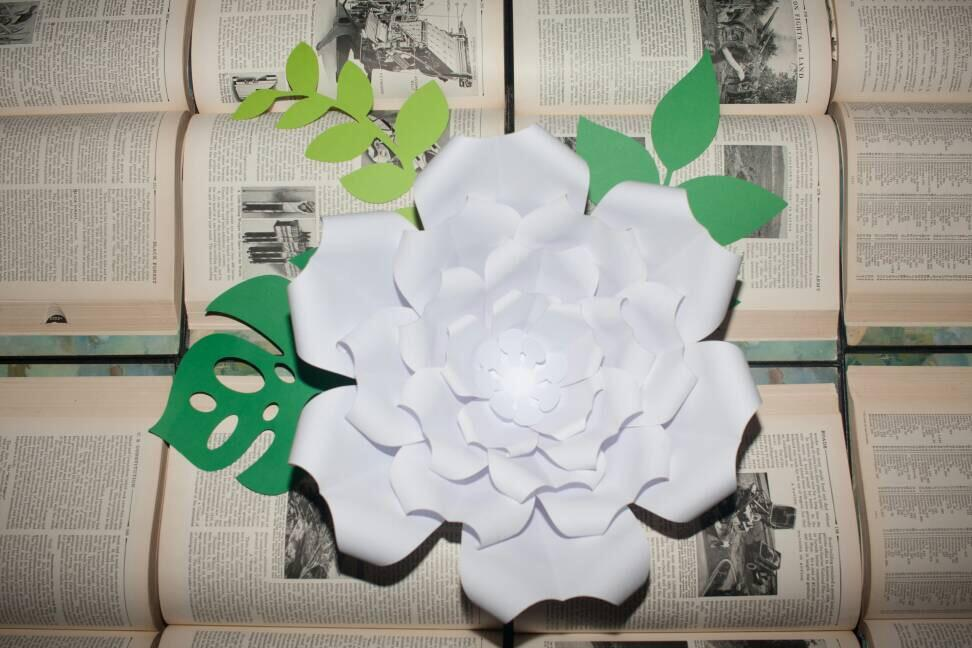 Paper flower know how events windhoek express dont miss the paper flower workshop to learn how to make it yourself photo facebook mightylinksfo