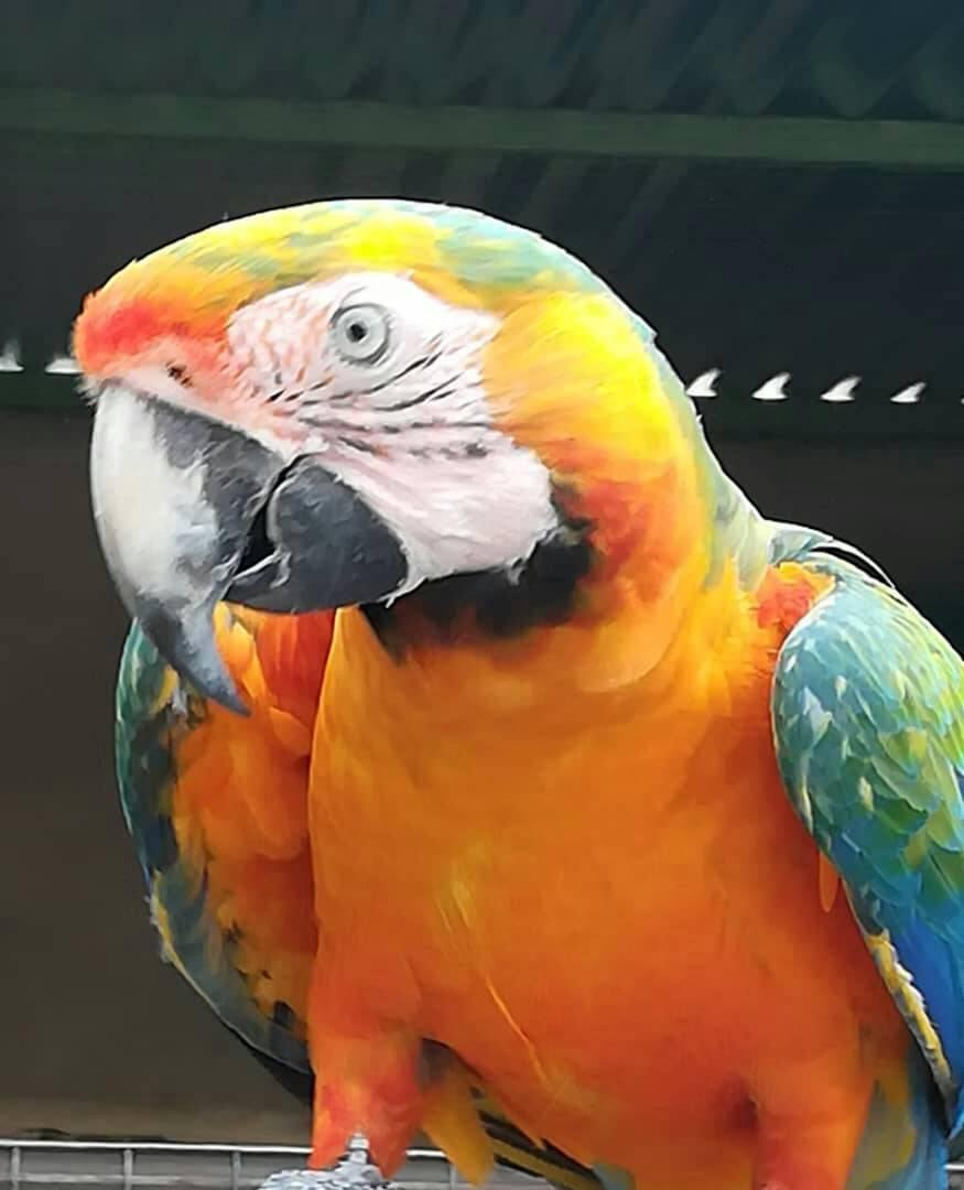 Exotic birds under the hammer at Otjiwarongo - Agriculture ...