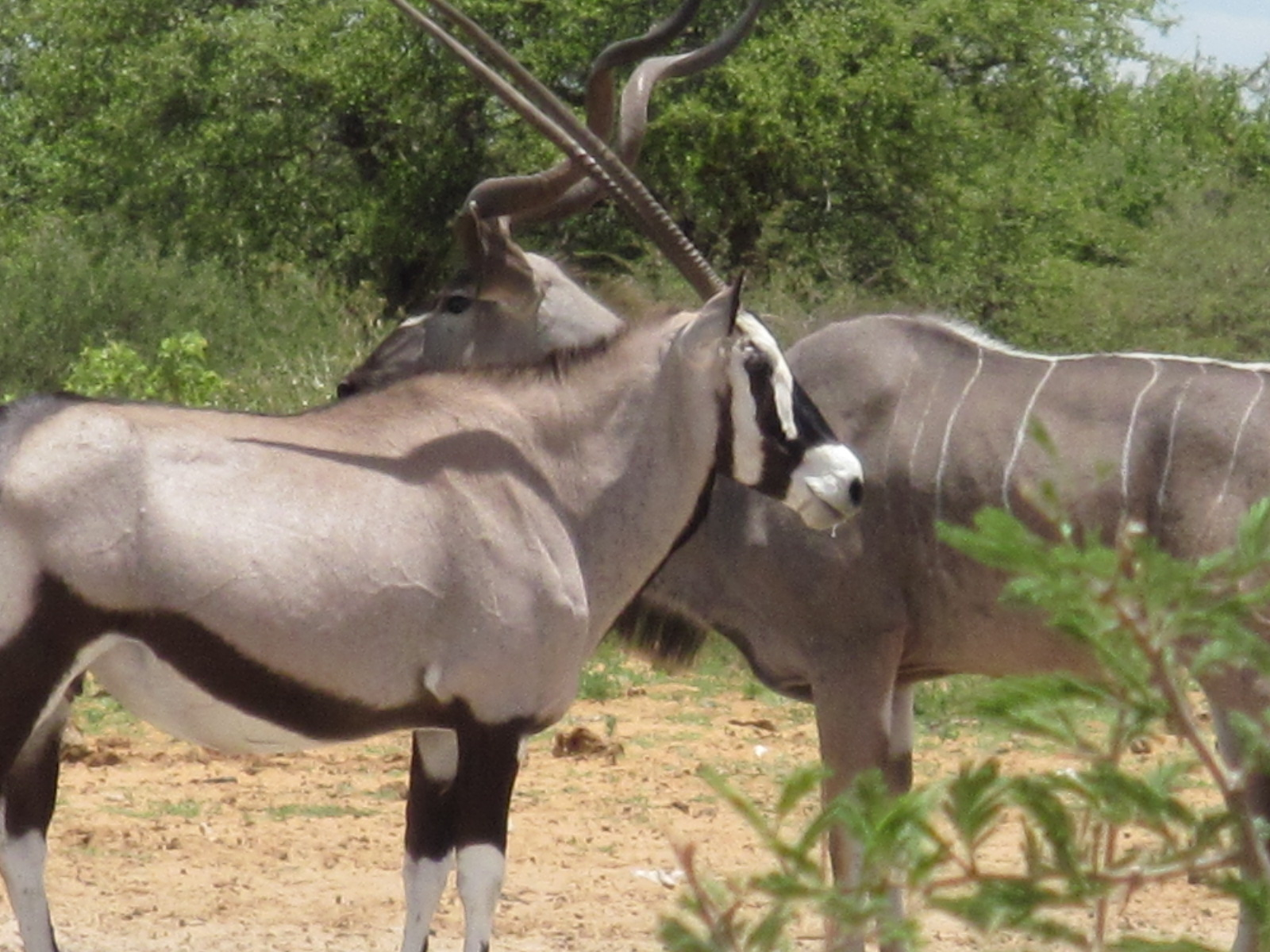 Hunting Is Not A White Only Industry Environment Namibian Sun