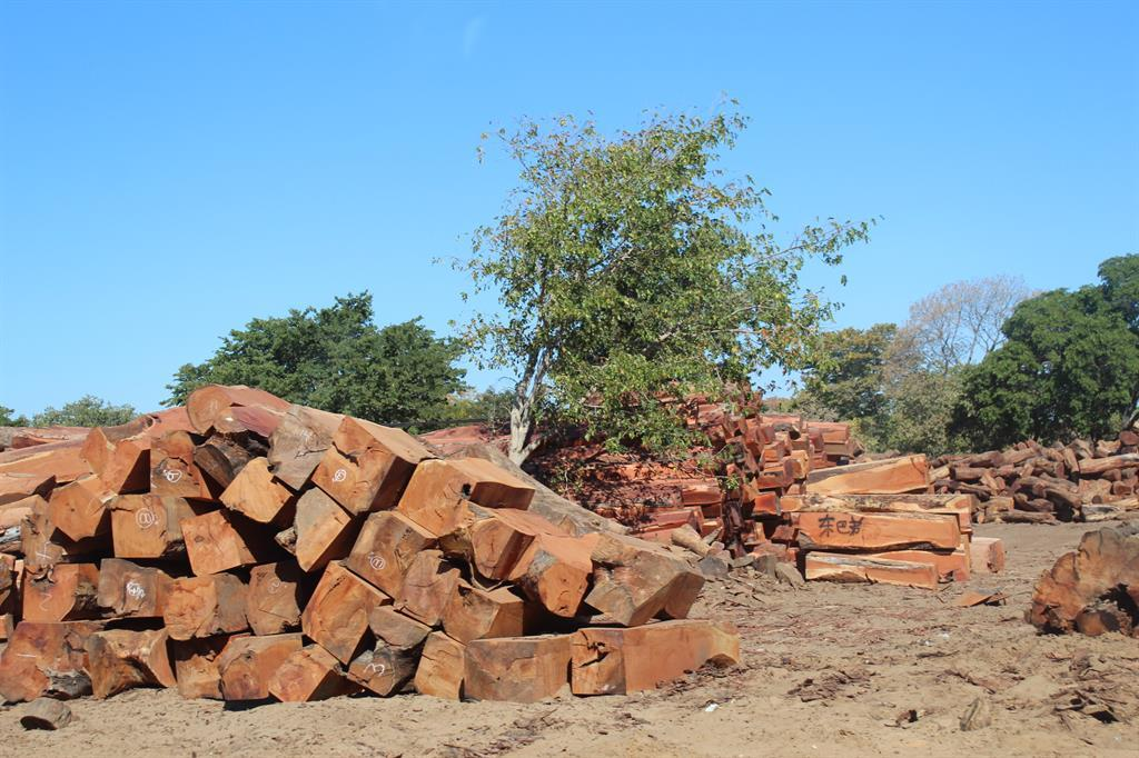 TRANSPORT: The transportation of timber may resume but harvesting is still not allowed. Photo: FILE